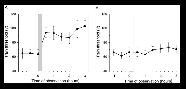 Suppression de la douleur par l'exposition des points d'acupuncture à une lumière polarisée